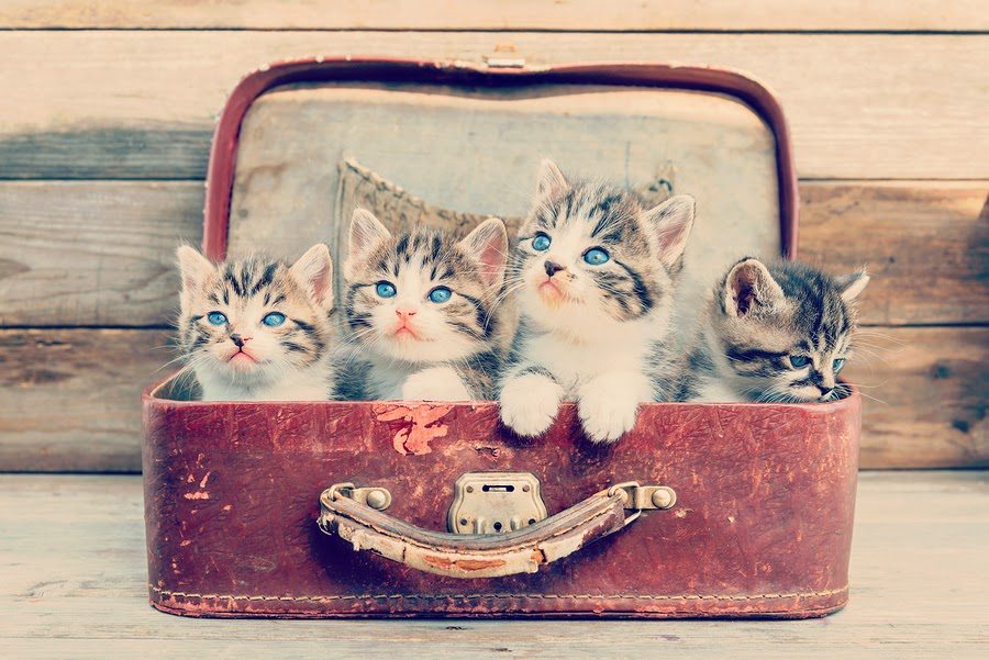 bigstock-Kittens-In-Retro-Suitcase-65178007