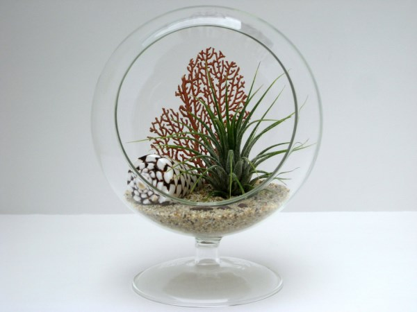 Footed-air-plant-terrarium-with-shell